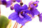 Stock Image : Violet flower