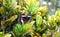 Stock Image :  Vlinder in een tropische tuin