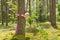 Stock Image : W lato lesie