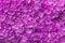 Stock Image : Wall of Purple Flowers