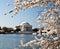Stock Image : Washington DC Jefferson Memorial Blossoms