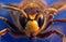 Stock Image : Wasp  on blue background