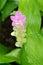 Stock Image : Watering flower