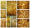Stock Image : Wheat collage