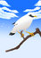 Stock Image : White bird
