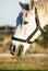 Stock Image : White Horse