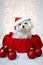 Stock Image : White Maltese Dog wearing Santa hat