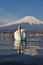 Stock Image : White Swan and Mt Fuji