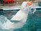 Stock Image : White whale in a delphinarium