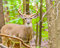 Stock Image : Whitetail Deer Buck