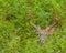 Stock Image : Whitetail Deer Buck
