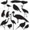 Stock Image : Wild birds