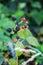 Stock Image : Wild Blackberries