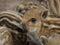 Stock Image : Wild boar piglet