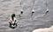 Stock Image : Wild duck