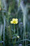 Stock Image : Wild flower
