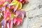 Stock Image : Wild grape plant