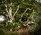 Stock Image : Wilderness grunge background