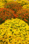 Stock Image : Wildflower garden