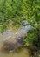 Stock Image : Willow overhangs stream
