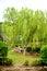 Stock Image : Willow Tree.