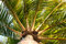 Stock Image : Windy Palm Tree