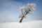 Stock Image : Winter tree