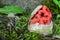 Stock Image : Witch heart mushroom