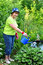 Stock Image : Woman gardener watering the plants