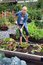 Stock Image : Woman vegetable garden