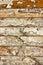 Stock Image : Wood grunge texture