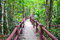 Stock Image : Wood path in jungle