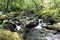 Woodland waterfall, dartmoor natinal park, devon