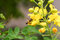 Stock Image : Yellow Bee