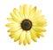 Stock Image : Yellow daisy flower
