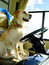 Stock Image : Yellow Dog Driving