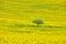 Stock Image : Yellow field