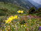 Stock Image : Yellow flowers in mountains