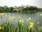 Stock Image : Yellow flowers near the lake