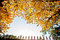 Stock Image : Yellow leaf