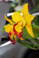 Stock Image : Yellow orchid 03