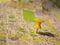 Stock Image : Yellow pushpin on a map
