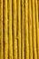 Stock Image : Yellow woods