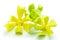 Stock Image : Ylang Ylang flower