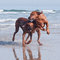 Stock Image : Two running on beach dogs