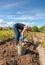 Stock Image : Young woman harvesting potato