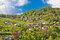 Stock Image : Zagorje hills vineyards and cottages