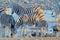 Stock Image : Zebras drinking water at sunset, Okaukeujo waterhole