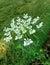 Stock Image :  zielone trawniki kwiaty