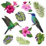 del colibrí, de HibisÑ de la acuarela nosotros flores y hojas de palma tropicales Pájaros exóticos dibujados mano de Colibri y  ilustración del vector